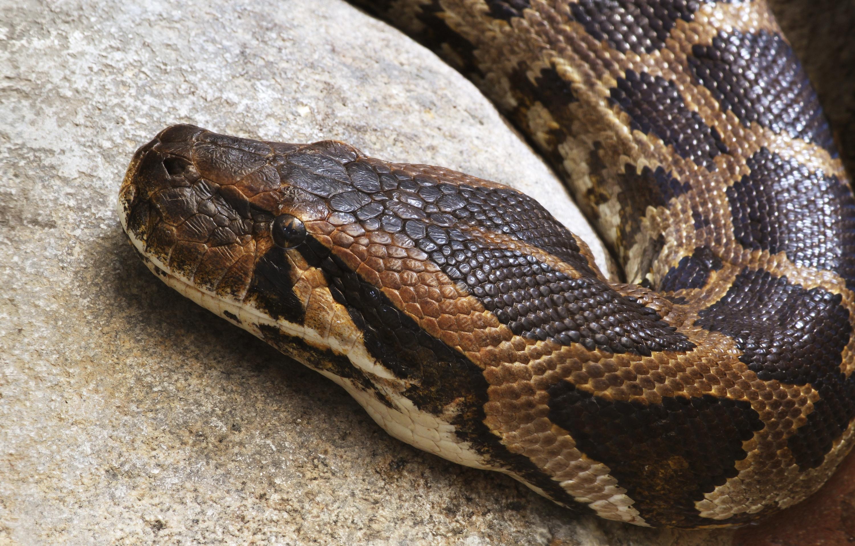 Image Result For Snake