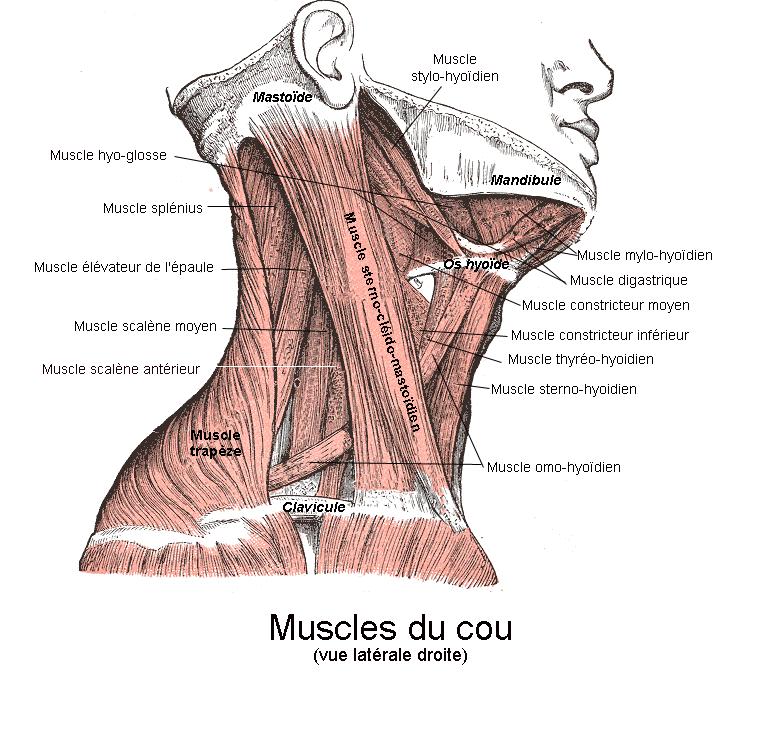 Fait mal les reins tire le ventre le retard de 10 jours le test négatif