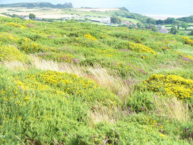 On Cefn Bryn Ridge - geograph.org.uk - 1490088
