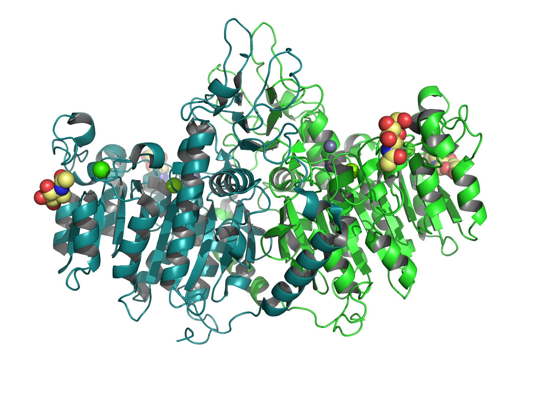 placental alkaline phosphatase wikipedia