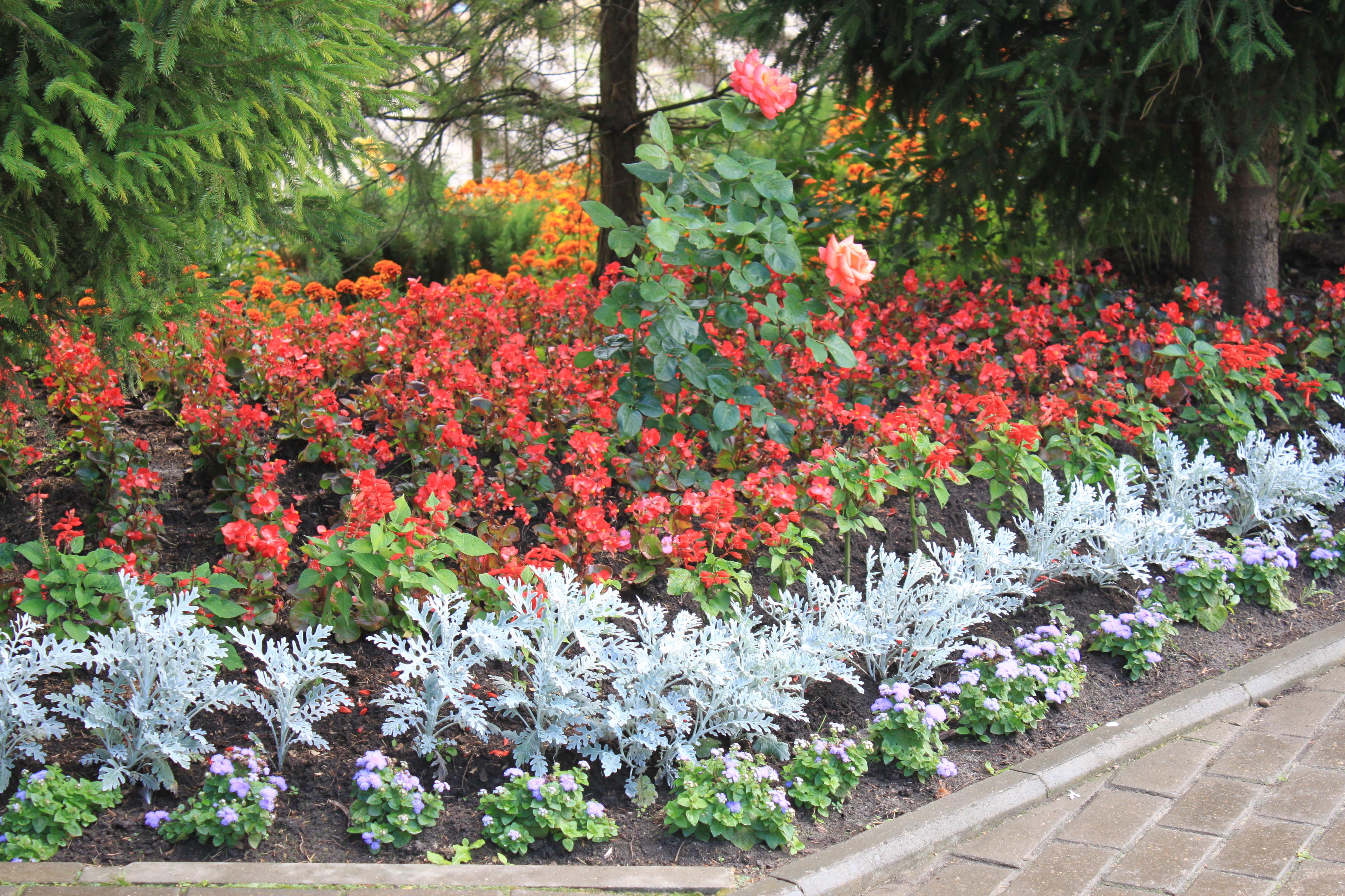 Image De Parterre De Fleurs file:parterre de fleurs - panoramio (2) - wikimedia commons