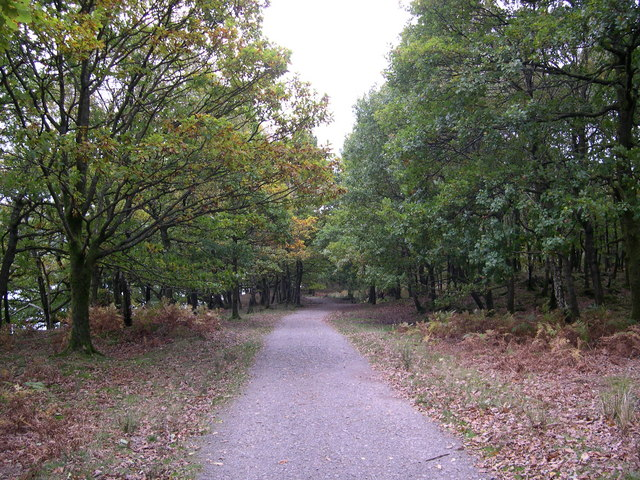 Path through woods - geograph.org.uk - 785350