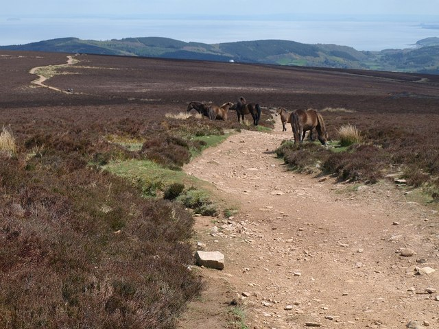 Ponies near Dunkery Beacon - geograph.org.uk - 1283116