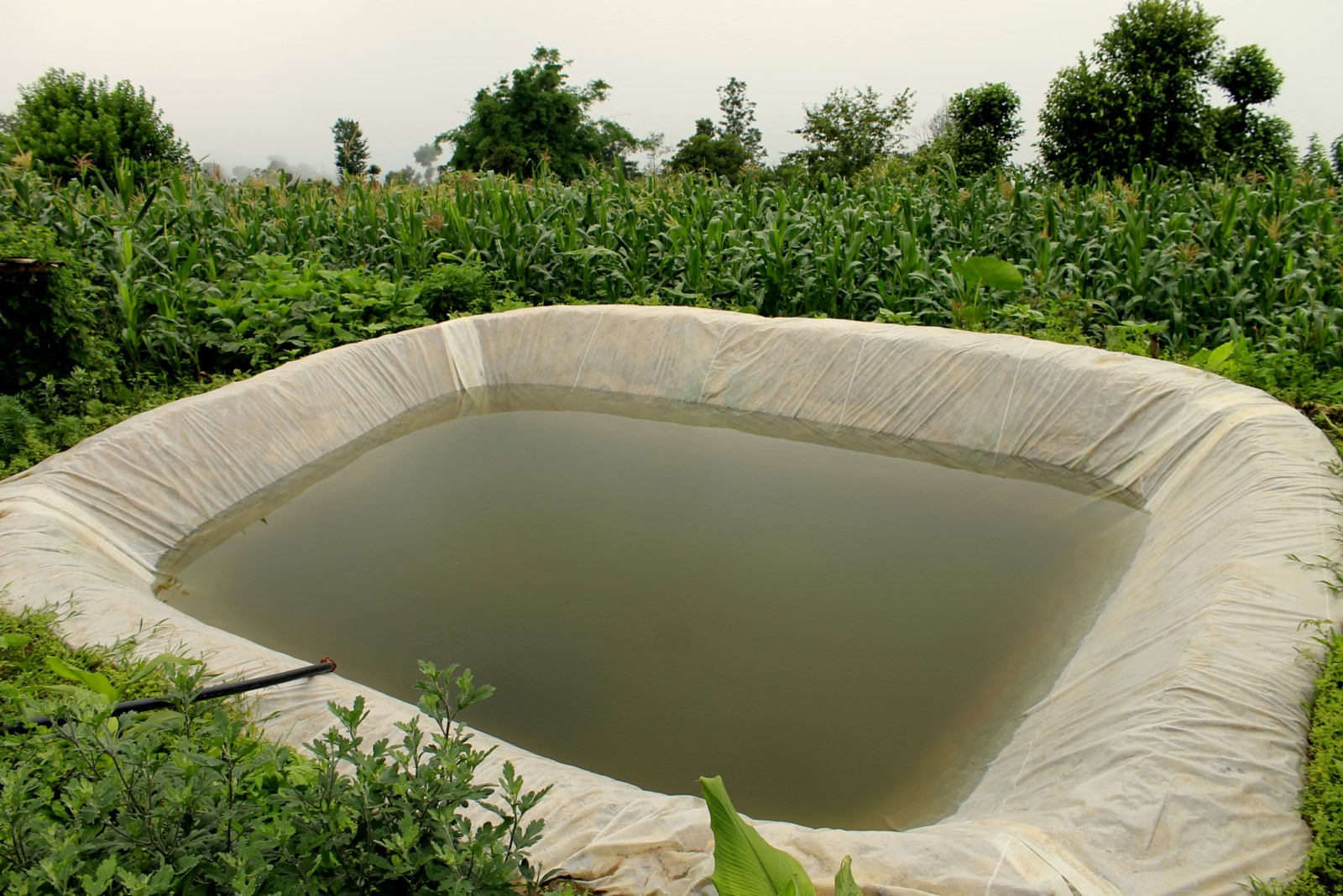 file rainwater harvesting and plastic pond jpg  file rainwater harvesting and plastic pond 2 jpg