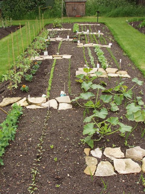 File student vegetable plot kew gardens for Vegetable garden plots design
