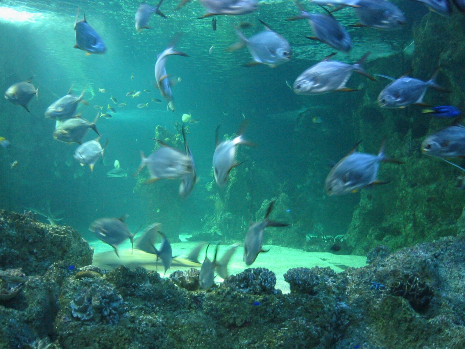 File Sydney Aquarium