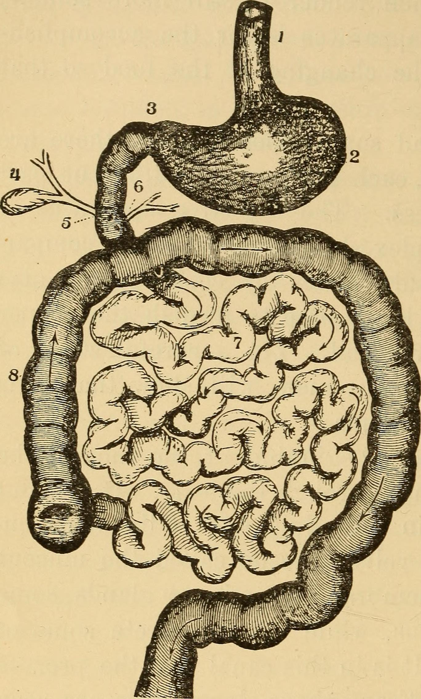 File:The essentials of health  A text-book of anatomy