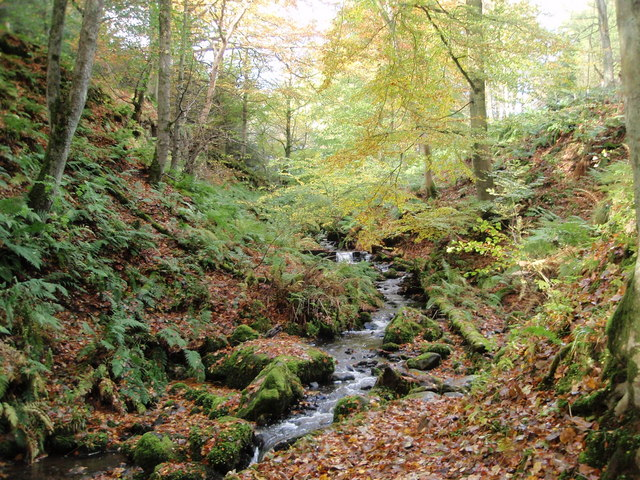 The pretty stream on the way down to the High Force viewing point - geograph.org.uk - 1022181