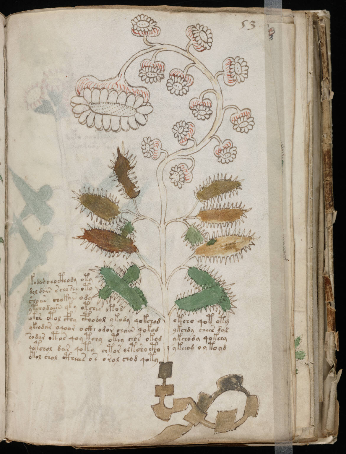 Voynich Manuscript %28105%29 ヴォイニッチ手稿(写本) どの言語にも属さない謎の文字!