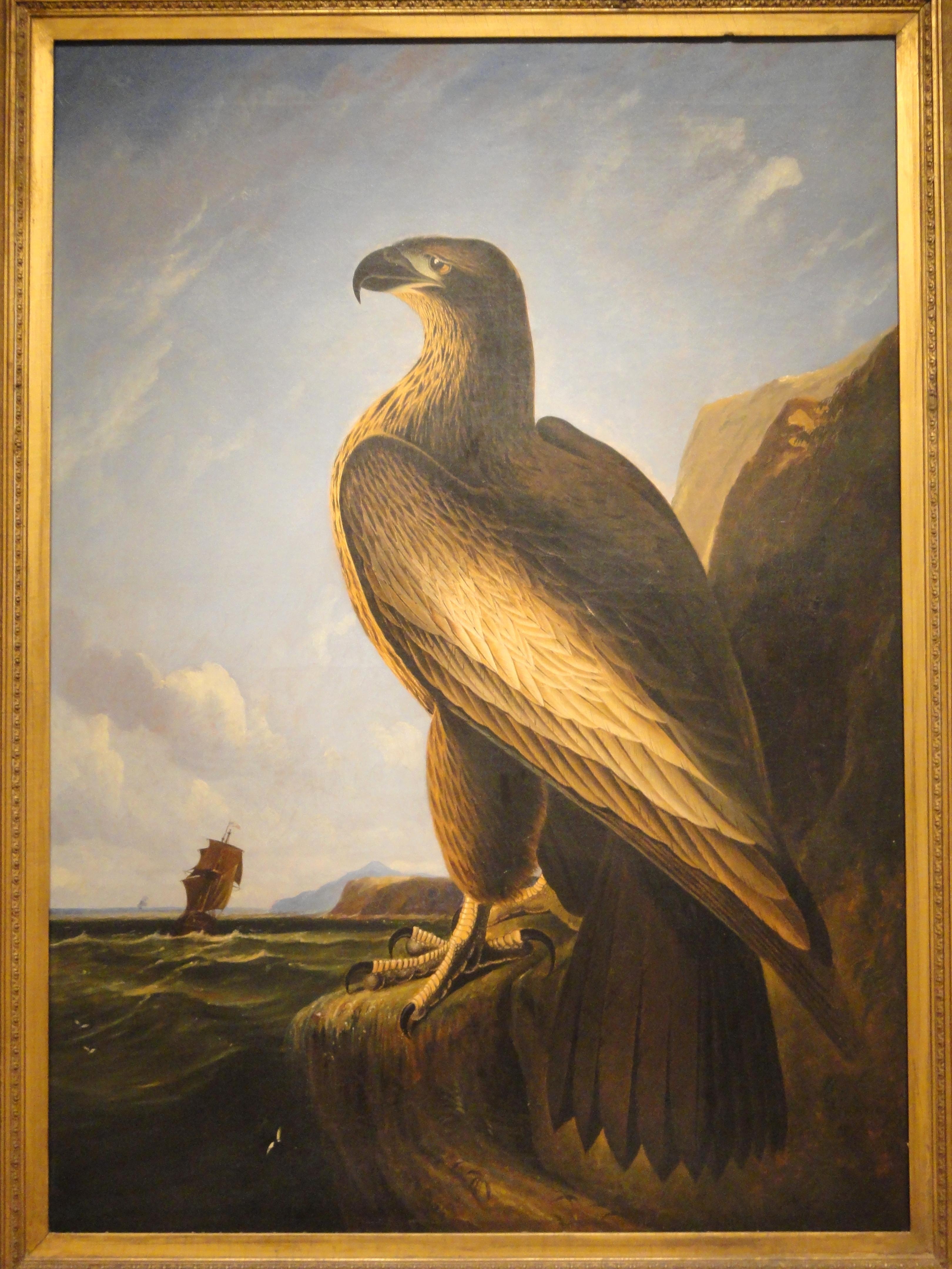 File:Washington Sea Eagle, circa 1836-1839, by John James Audubon ...