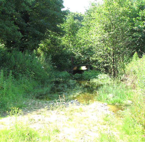 Whitlingham Country Park - an overgrown water course - geograph.org.uk - 1382041