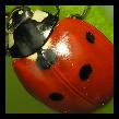 Wikibotón rojo.PNG