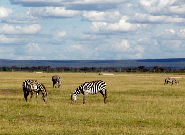 Contoh Ekosistem padang rumput di Kenya -Pengertian ekosistem