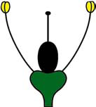 Achlamyde