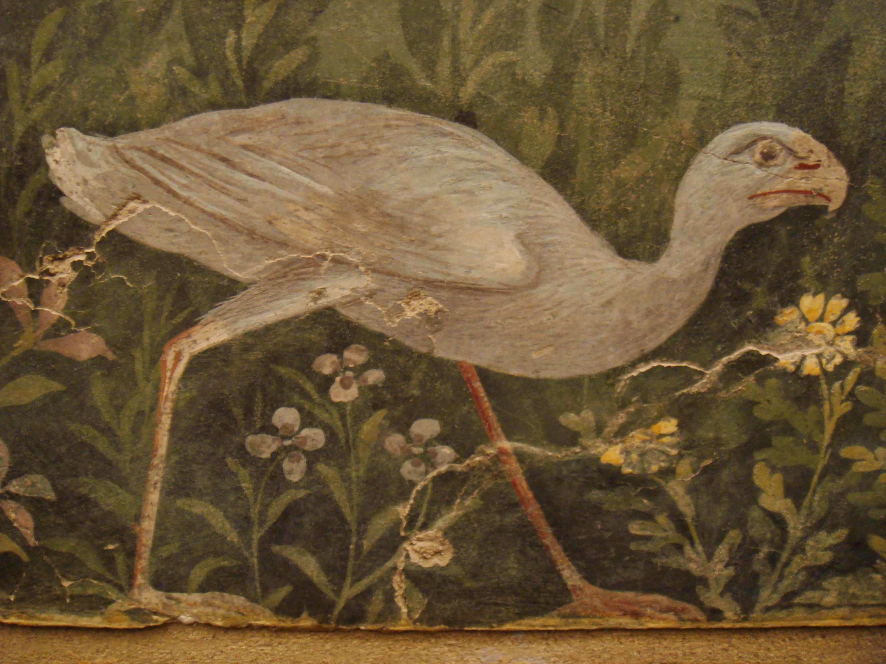 Risultati immagini per porphyrio porphyrio affresco pompei gallina