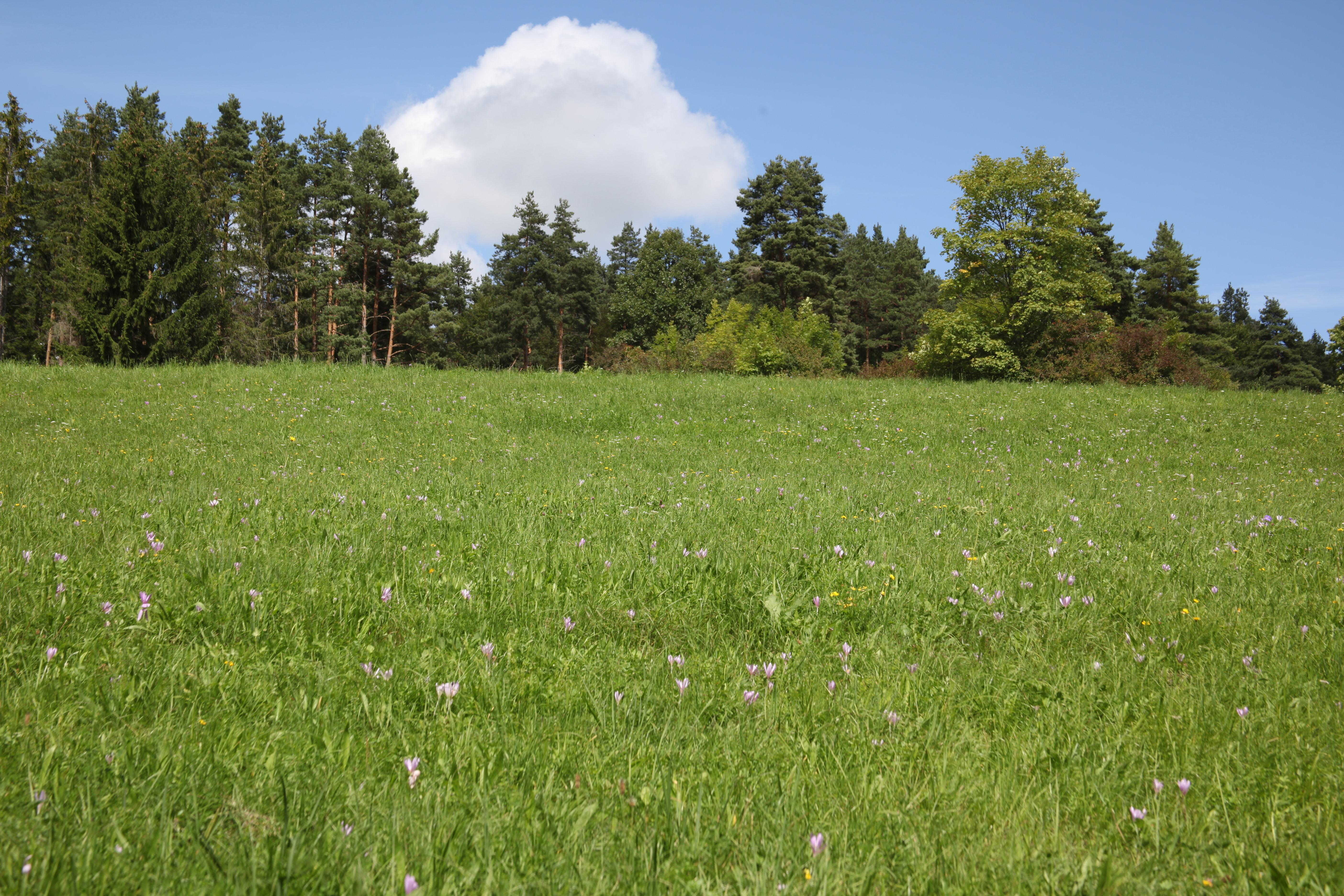 single hechingen Bitterfeld-Wolfen