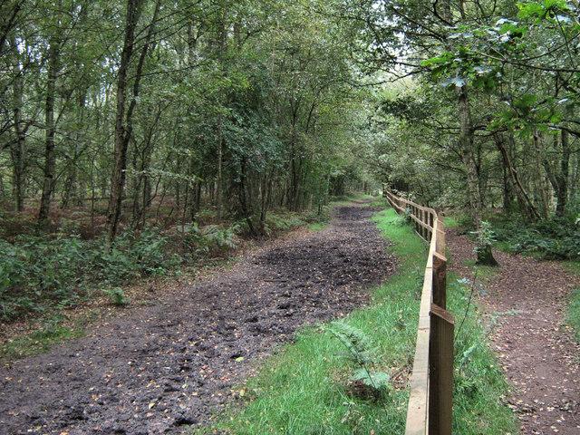 Bridle path at Brereton Heath - geograph.org.uk - 1562393
