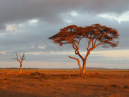 Photograph of the Burao countryside in 2006 Burao countryside.jpg
