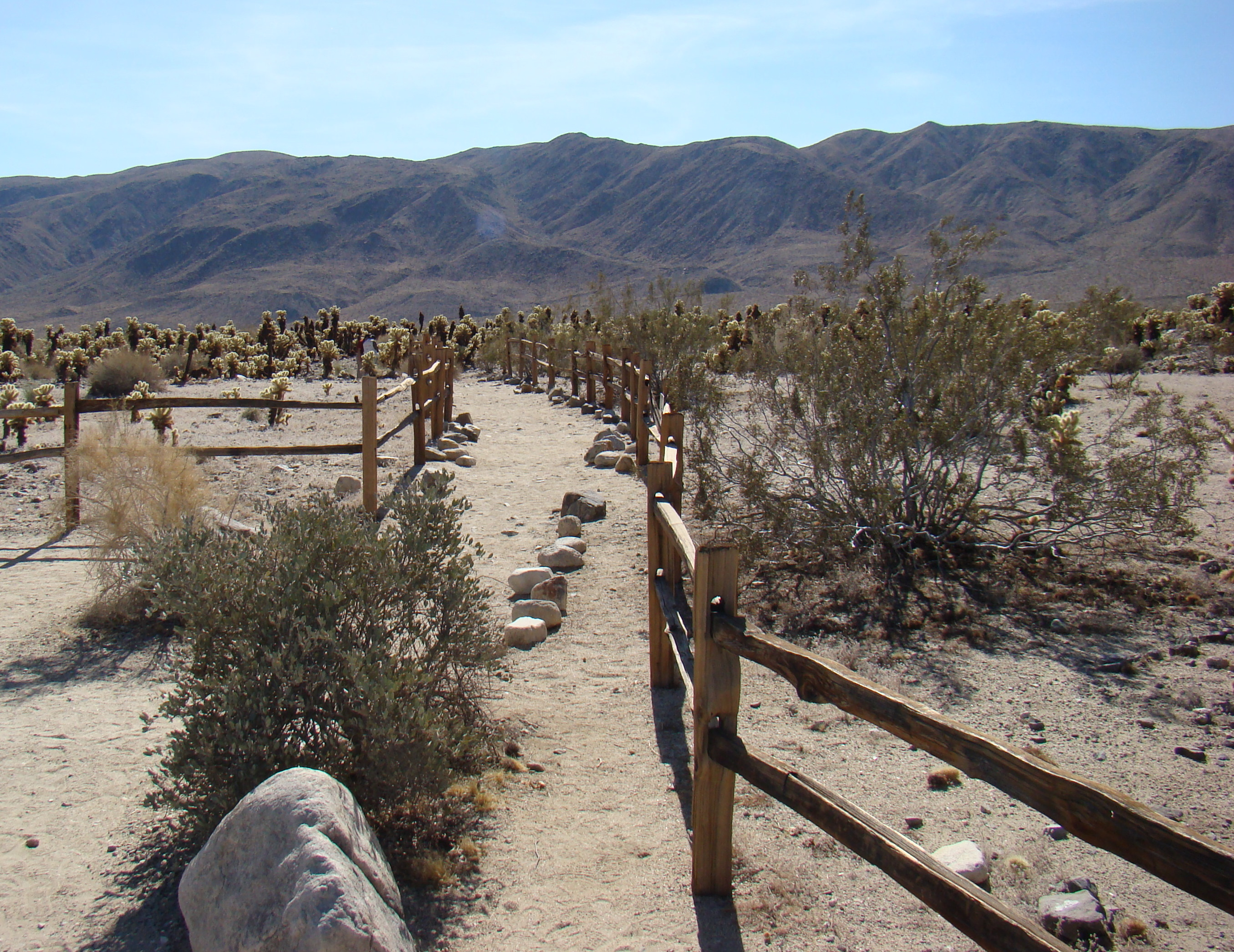 File Cholla Cactus Garden Nature Trail Joshua Tree National Park Jpg Wikimedia Commons