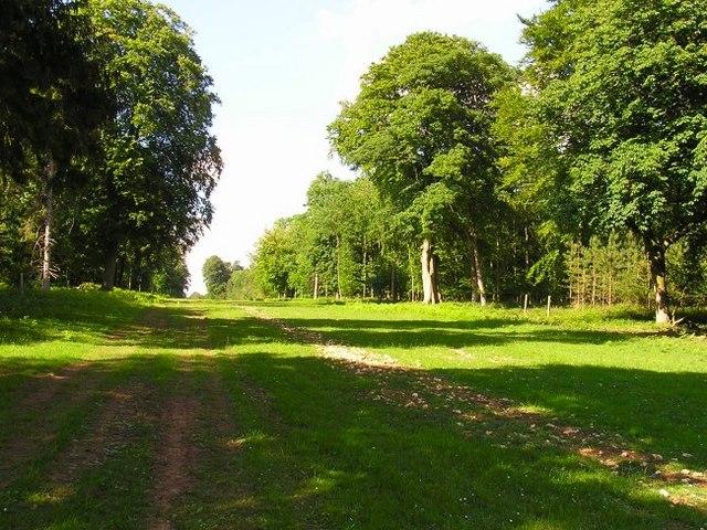 Cirencester Park - geograph.org.uk - 457244