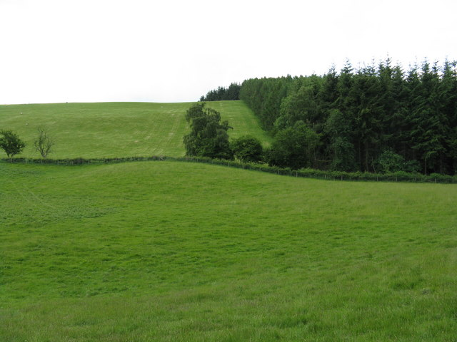 File:Edge of Coles Hill wood - geograph.org.uk - 846865.jpg