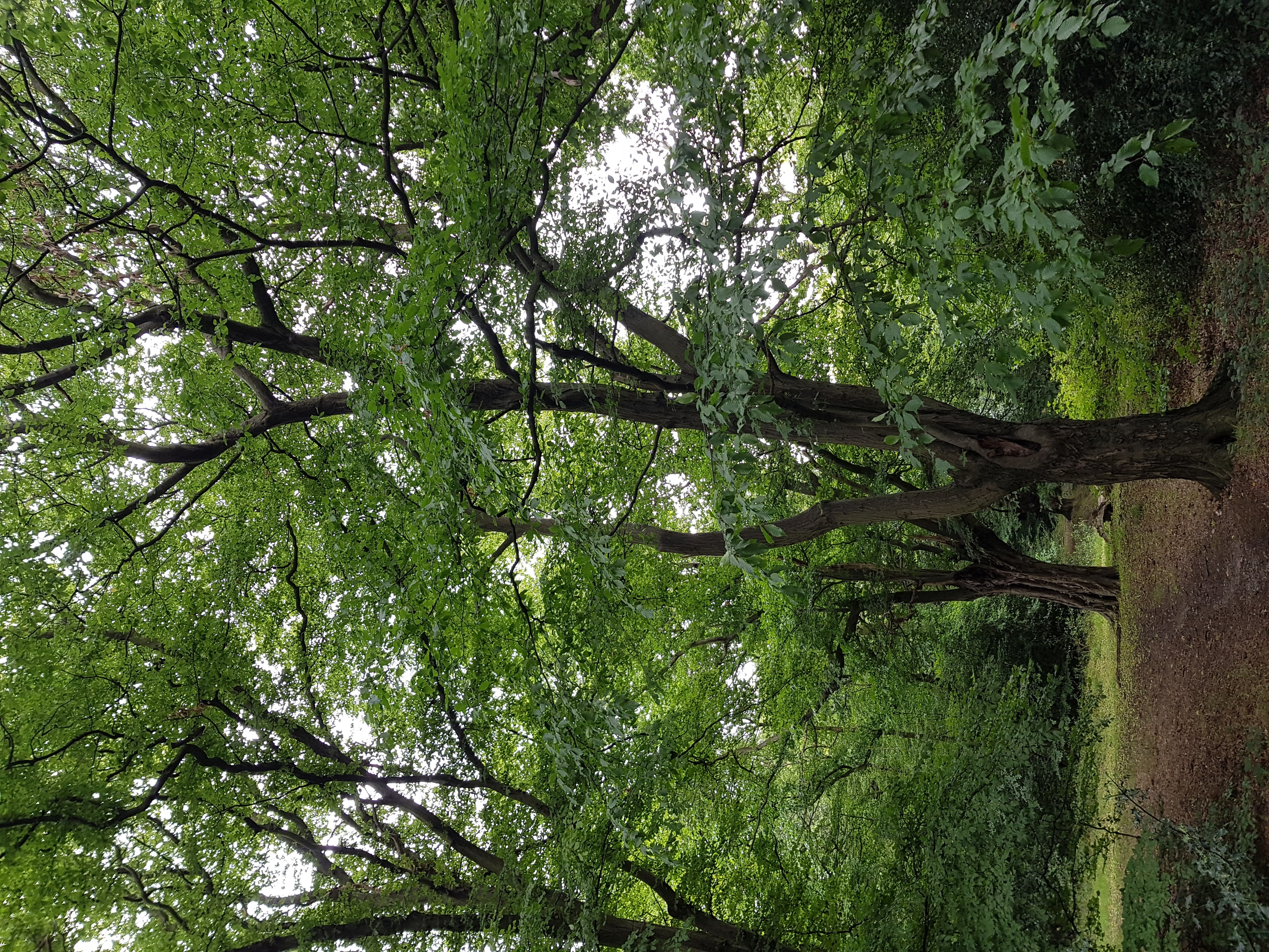 [Photo of trees in Epping Forest]
