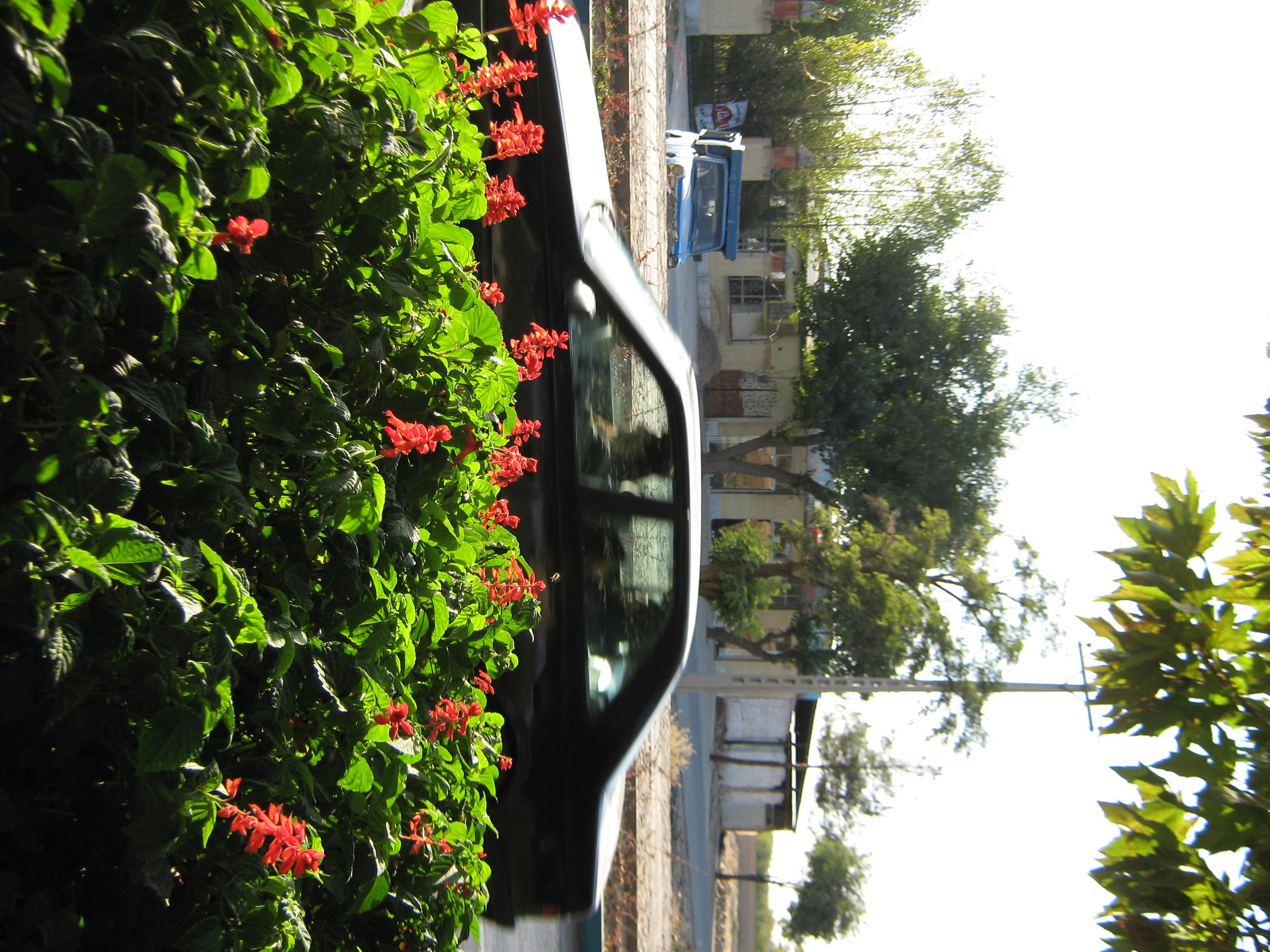 File Flowers of Barier Khayyam boulevard Nishapur 11 JPG Wikimedia mons