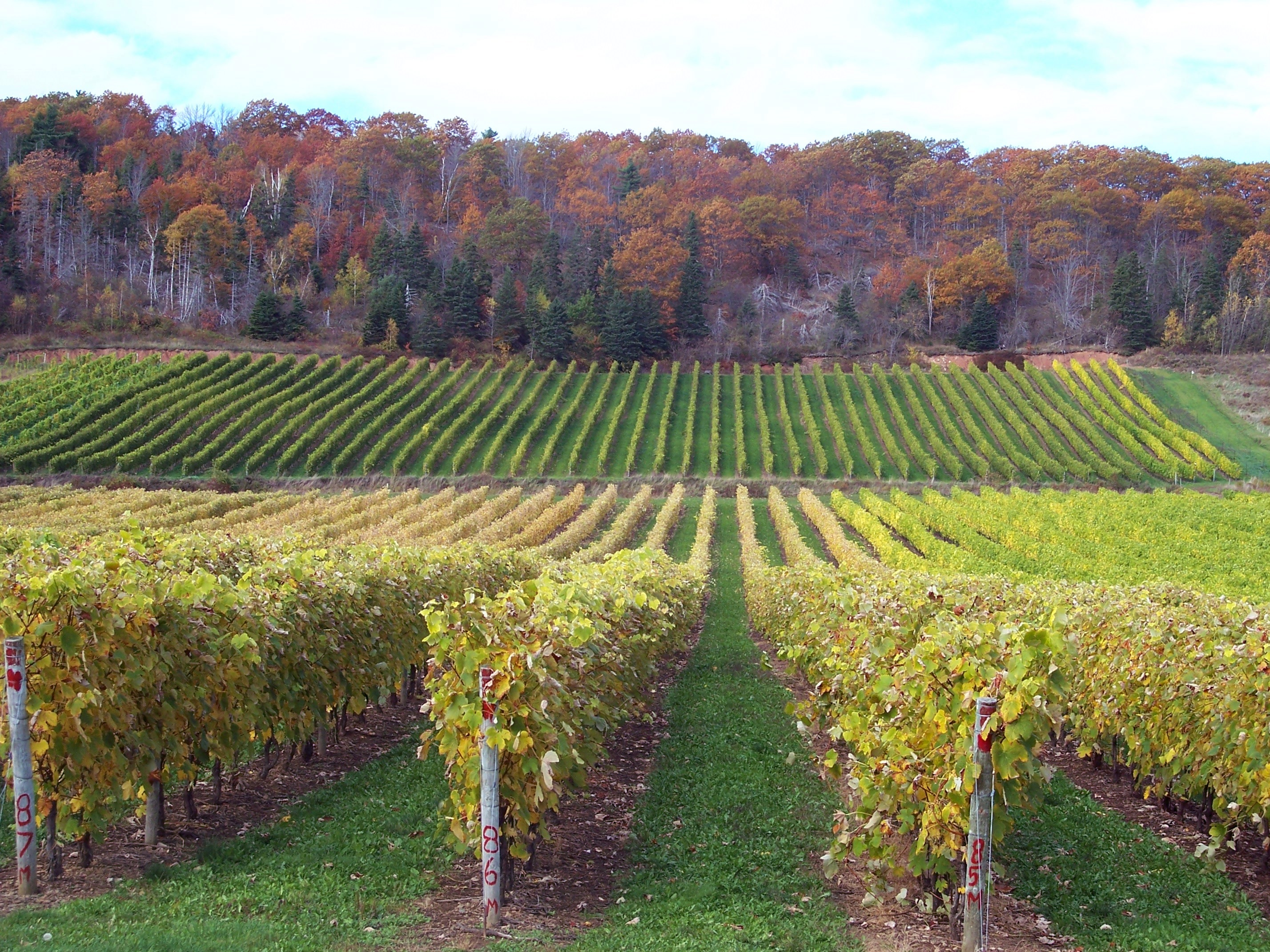 Hudson Valley Wine And Food Festival Groupon