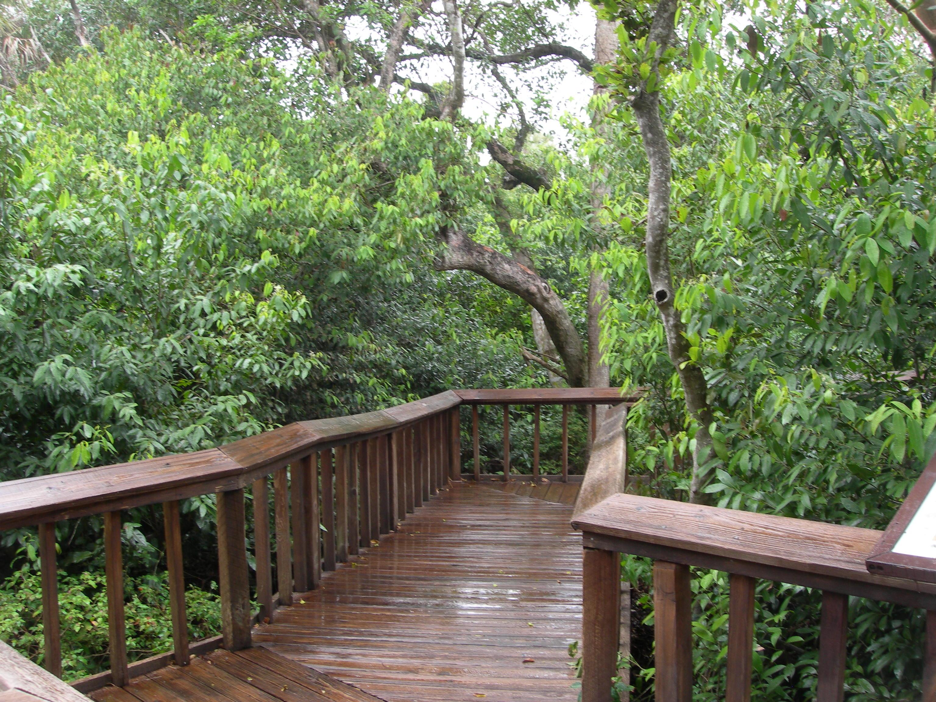 Gumbo Limbo Environmental Complex - Wikipedia