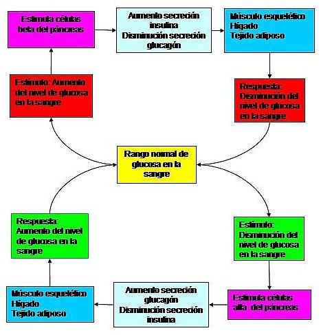 hormonas lipidicas yahoo dating