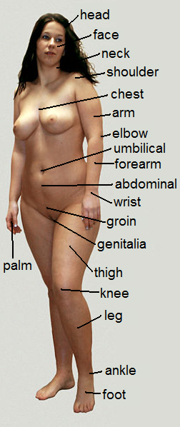 Girl body parts nude