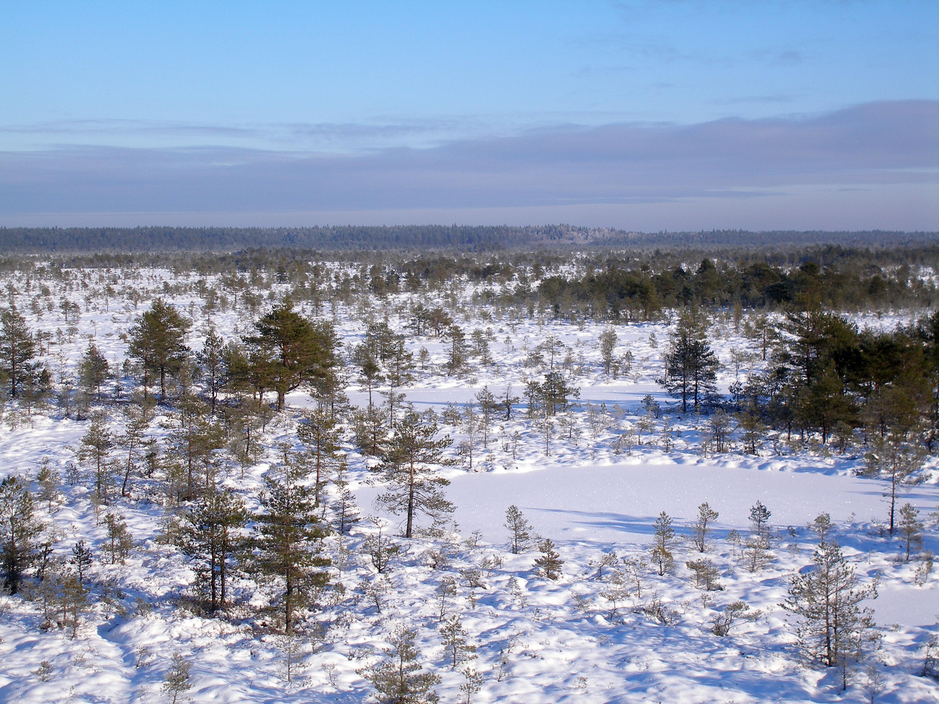 Põhja-Kõrvemaa Nature Reserve - Wikipedia