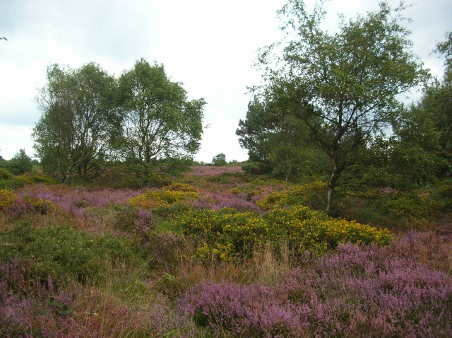 Kelling Heath - geograph.org.uk - 562026