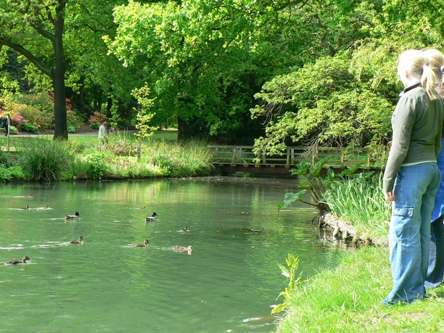 Menagerie Pond, Temple Newsam - geograph.org.uk - 180240