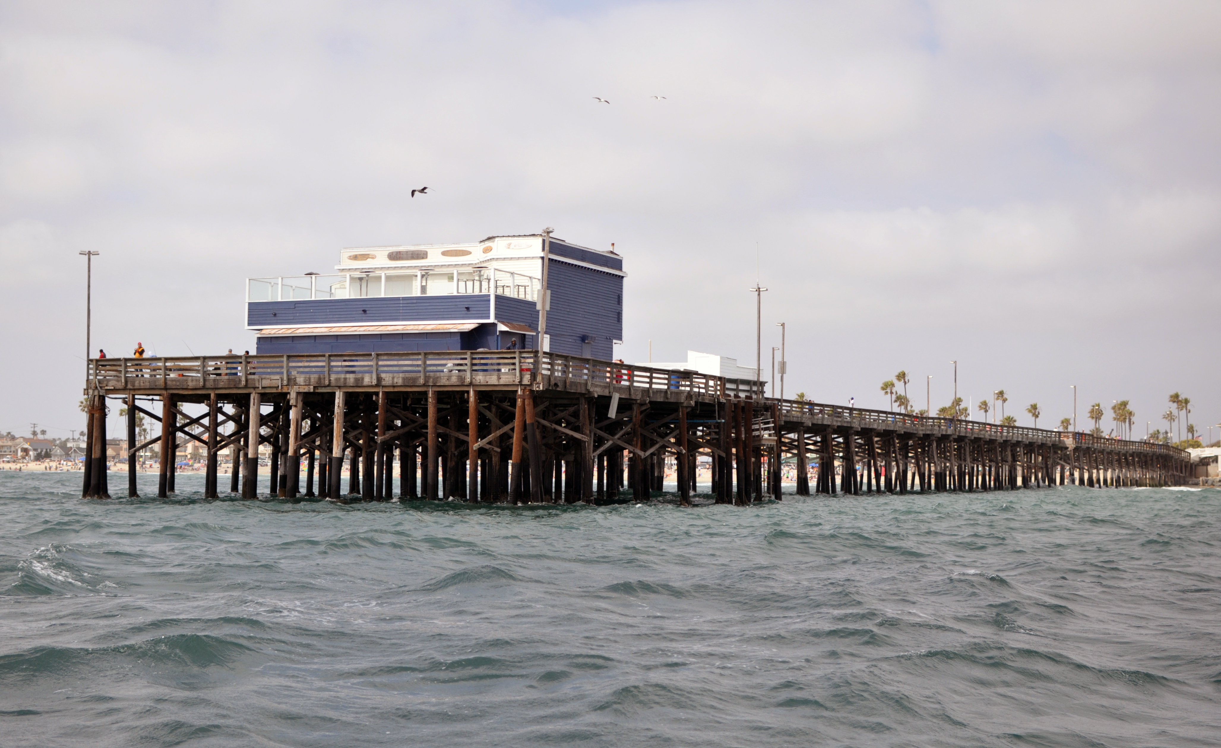 File newport pier photo d ramey wikimedia commons for Newport pier fishing