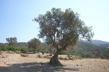 arbre de grande taille