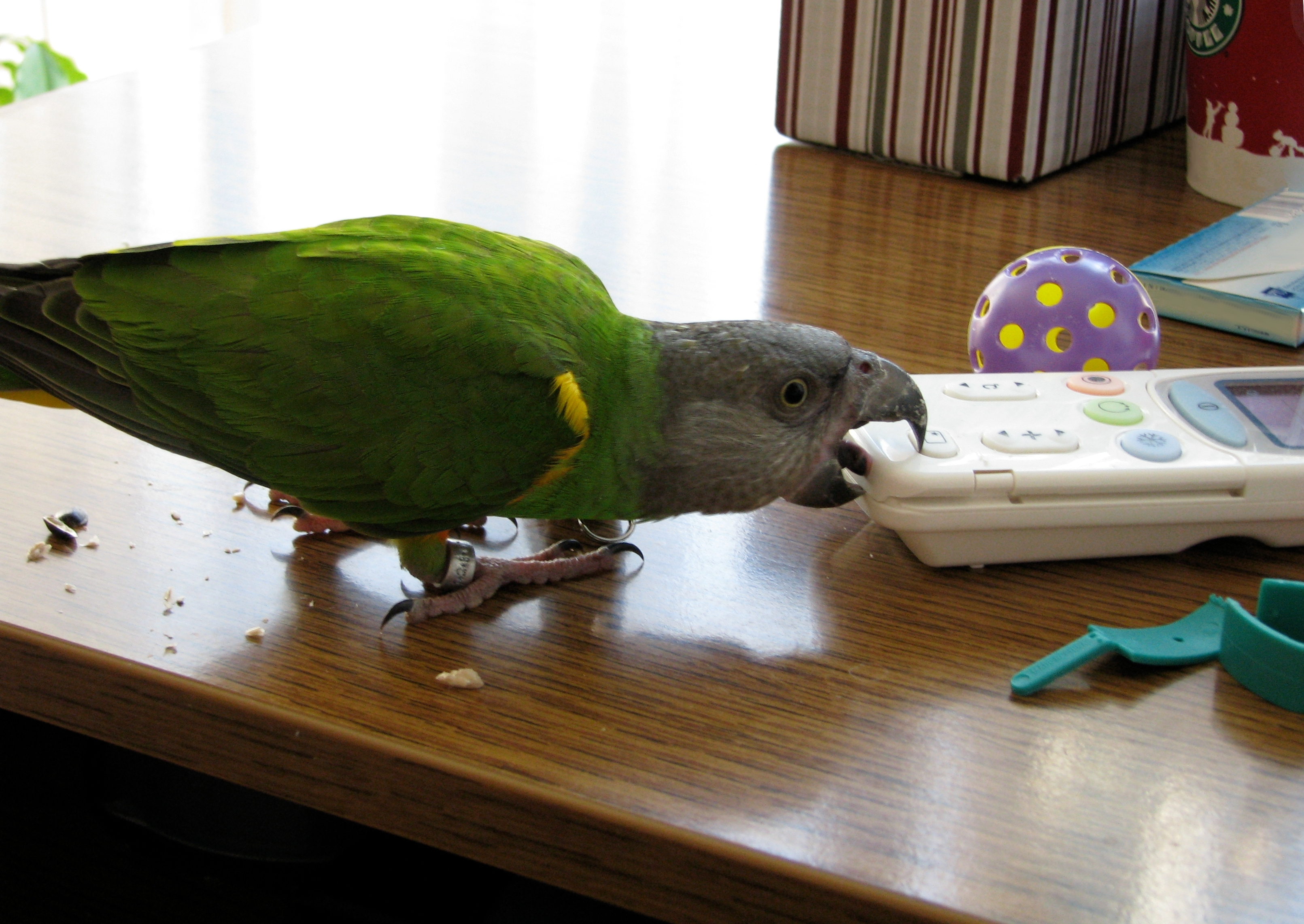 Image result for bird chew furniture