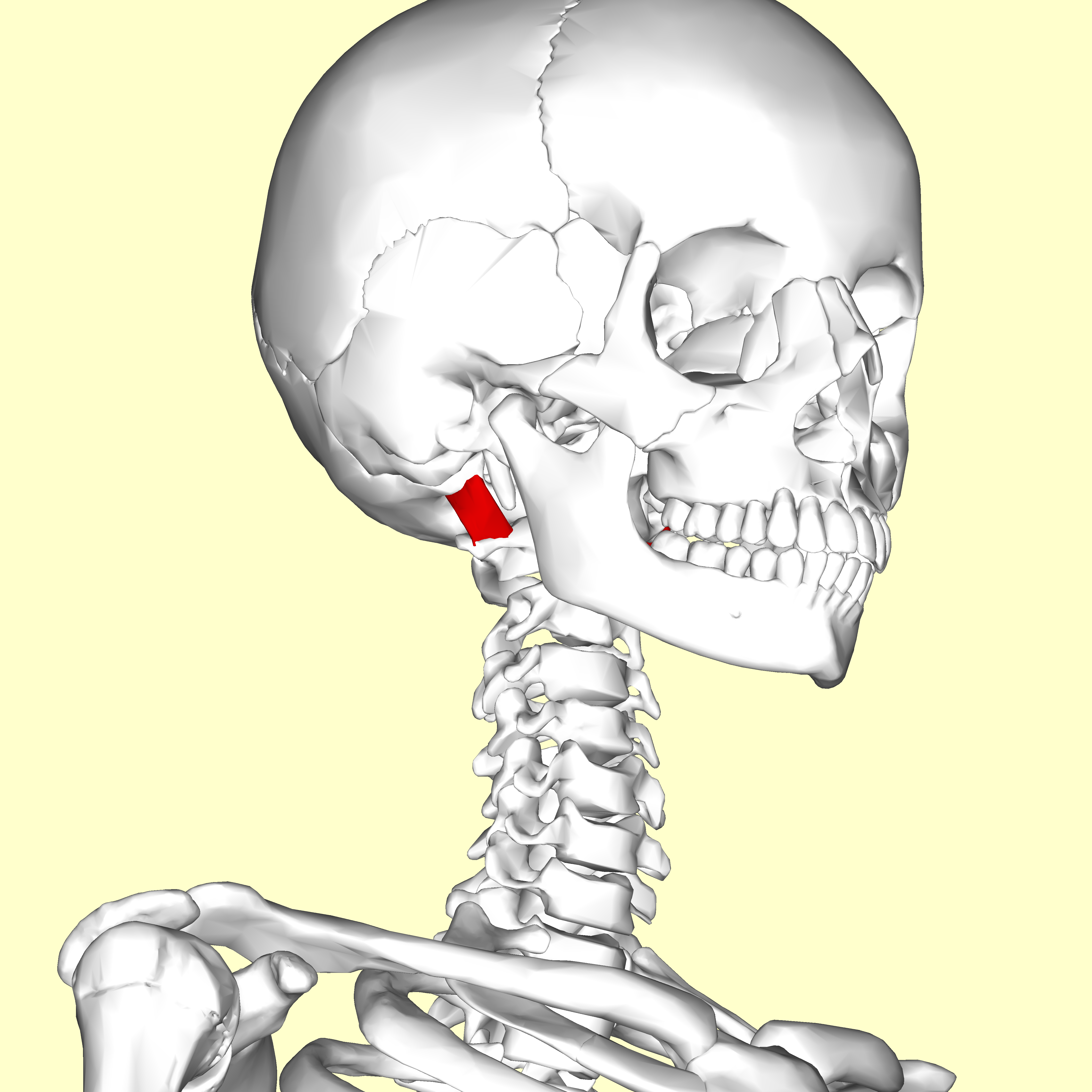 File:Rectus capitis lateralis muscle04.png - Wikimedia Commons