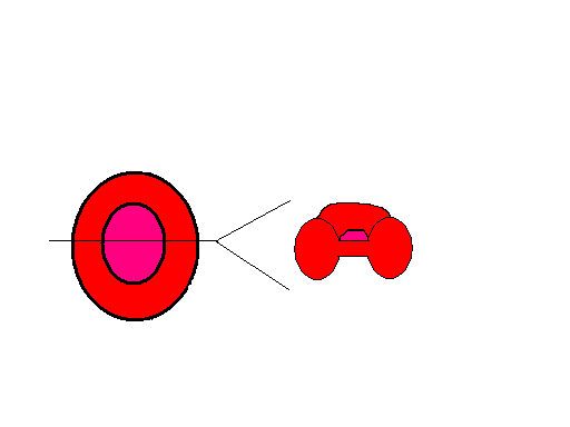 Basic diagram of a red blood cell search for wiring diagrams file red blood cell diagram png wikimedia commons rh commons wikimedia org diagram of a red ccuart Gallery