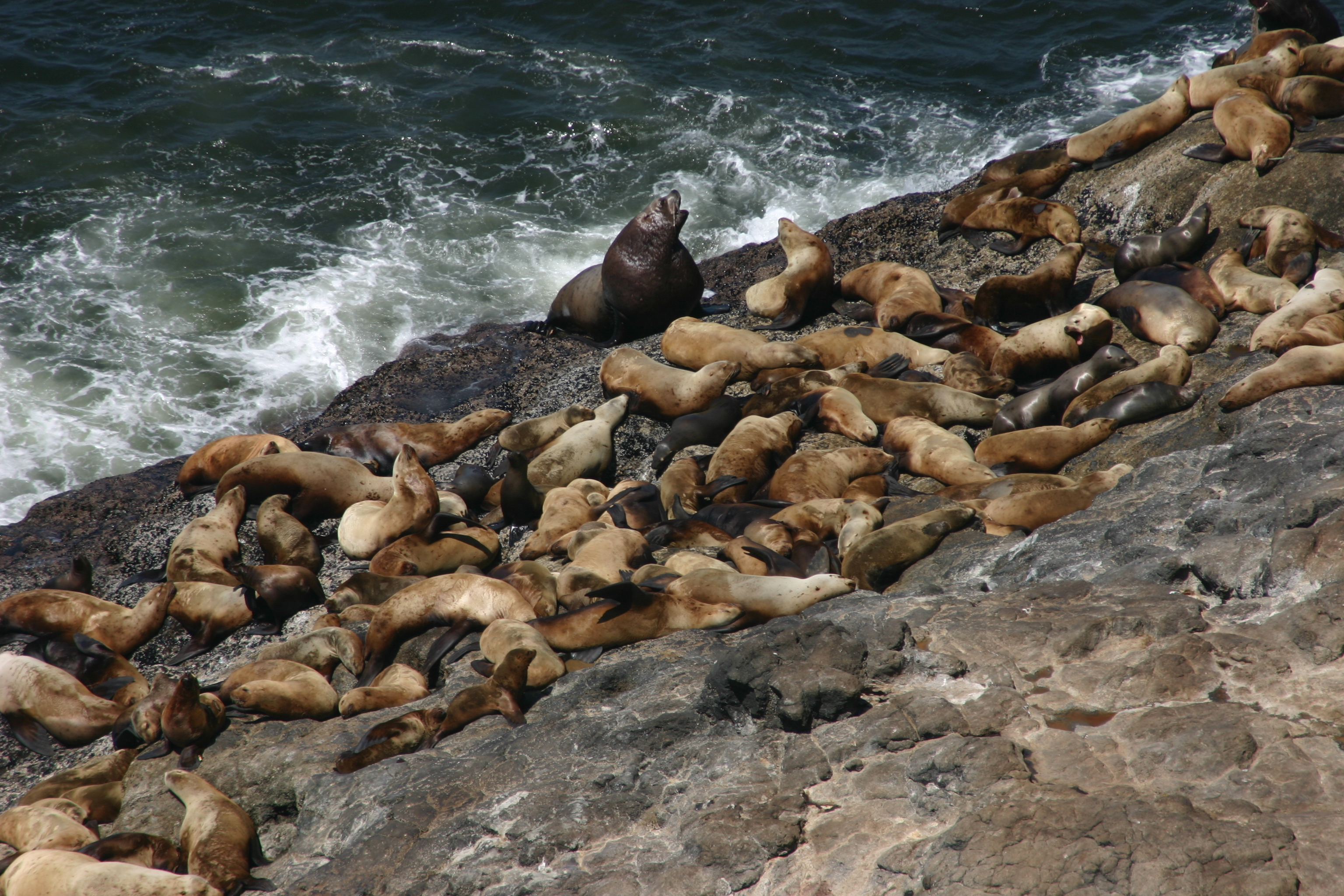 File:Sea Lion Caves Lookout.JPG - Wikimedia Commons