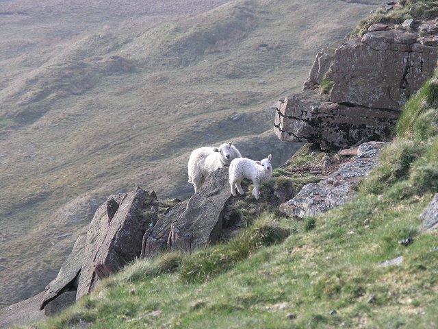 Sheep on a precarious crag - geograph.org.uk - 404080