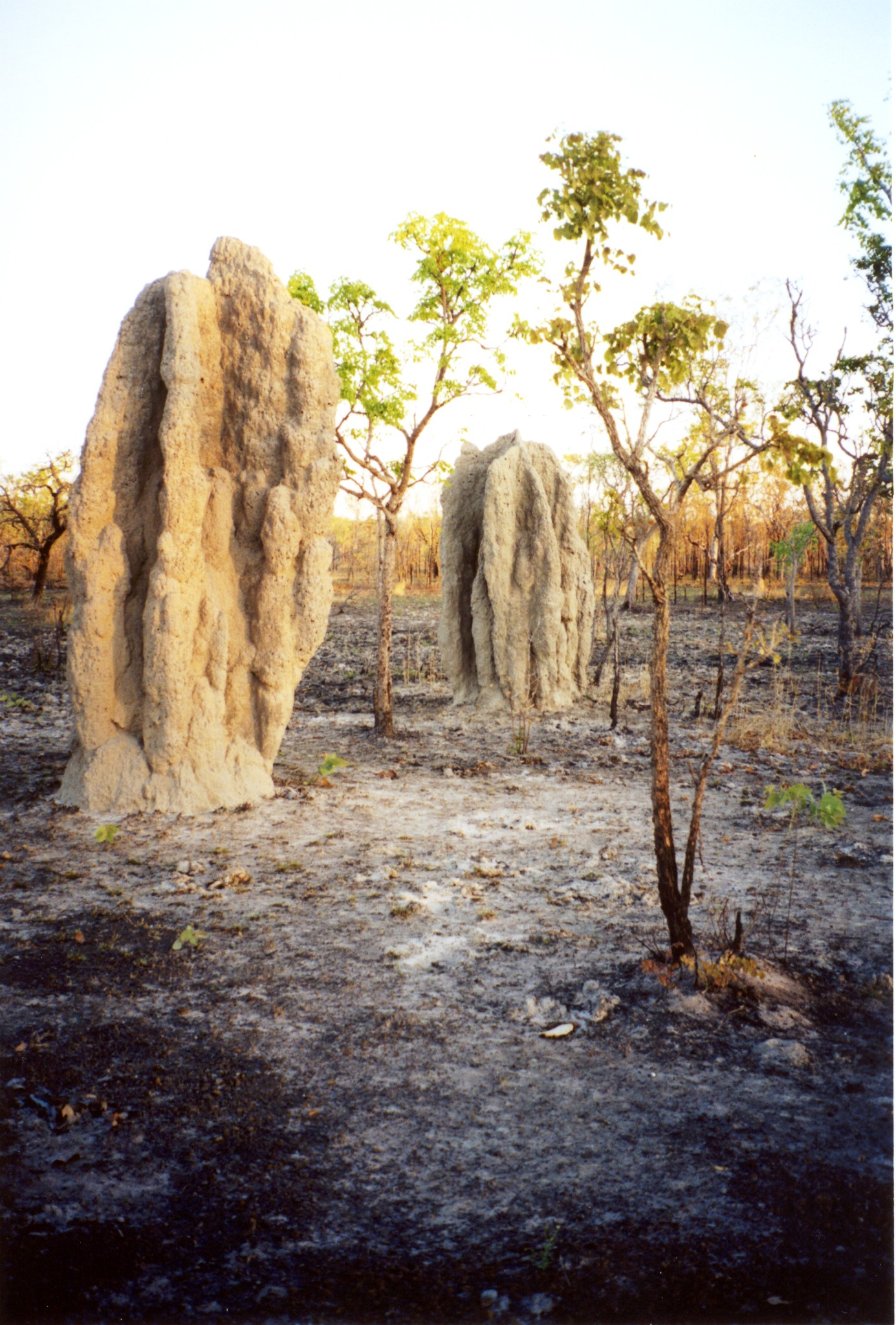 tropical savanna information