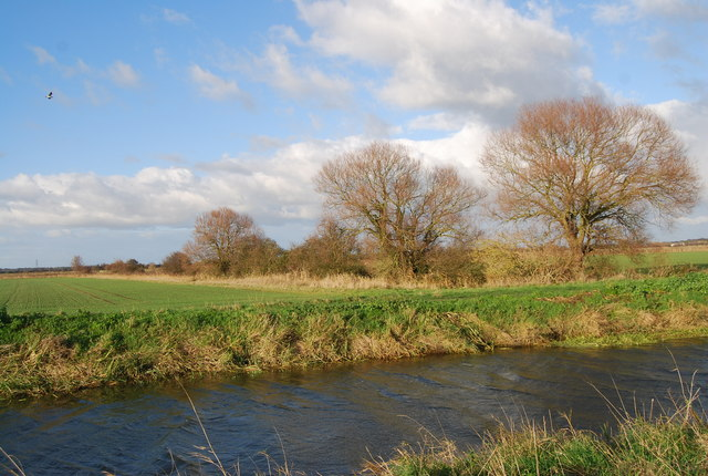 Trees follow a drainage ditch near the Little Stour - geograph.org.uk - 1620698.jpg