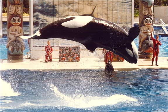 Image:WIKI SEA WORLD FL 1.jpg