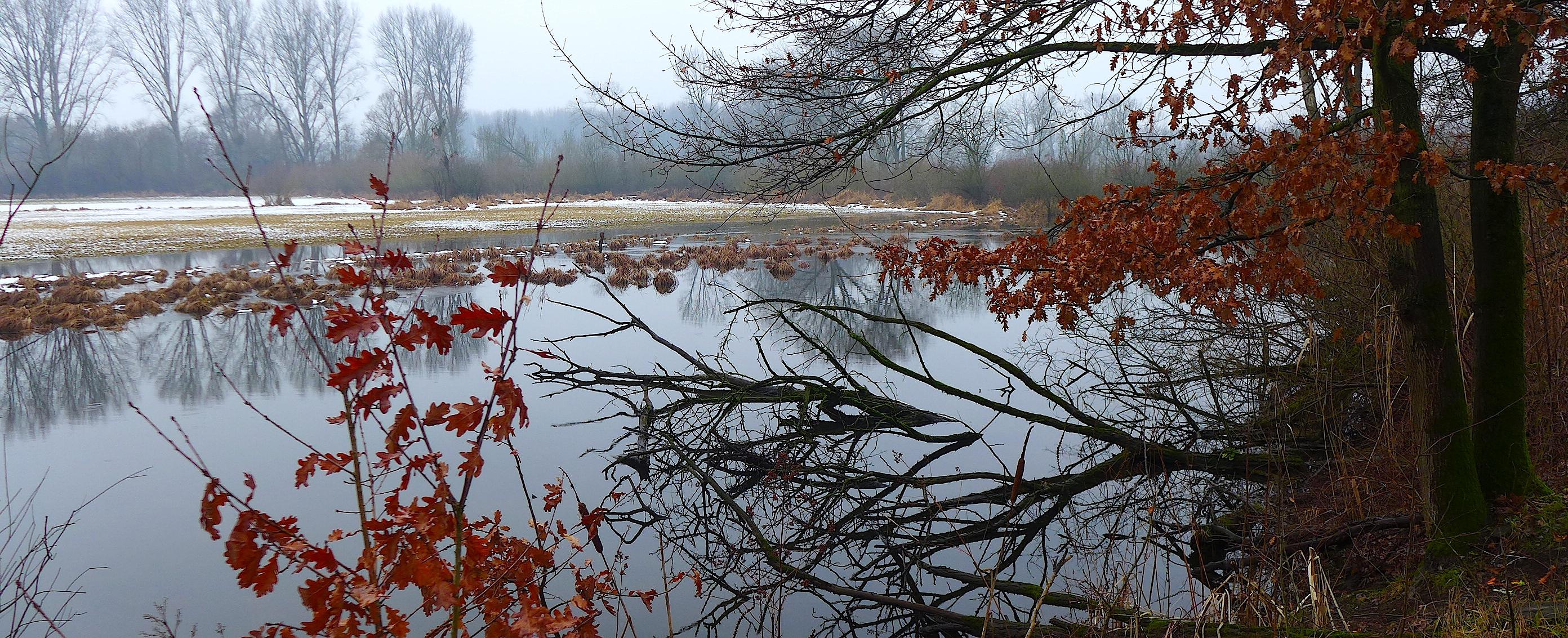 Спящий зимний Старый Рейн.
