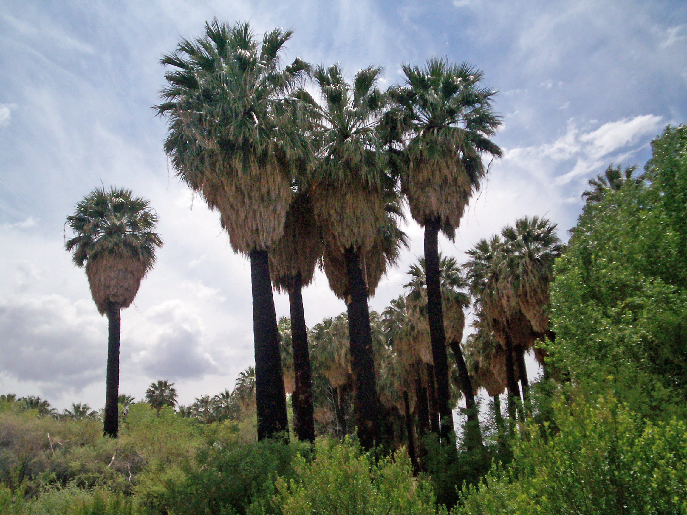Warm Springs Natural Area - Wikipedia