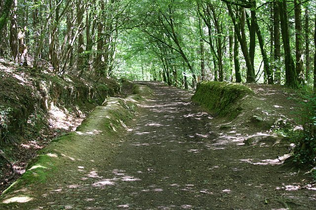 Woodland Path - geograph.org.uk - 207382