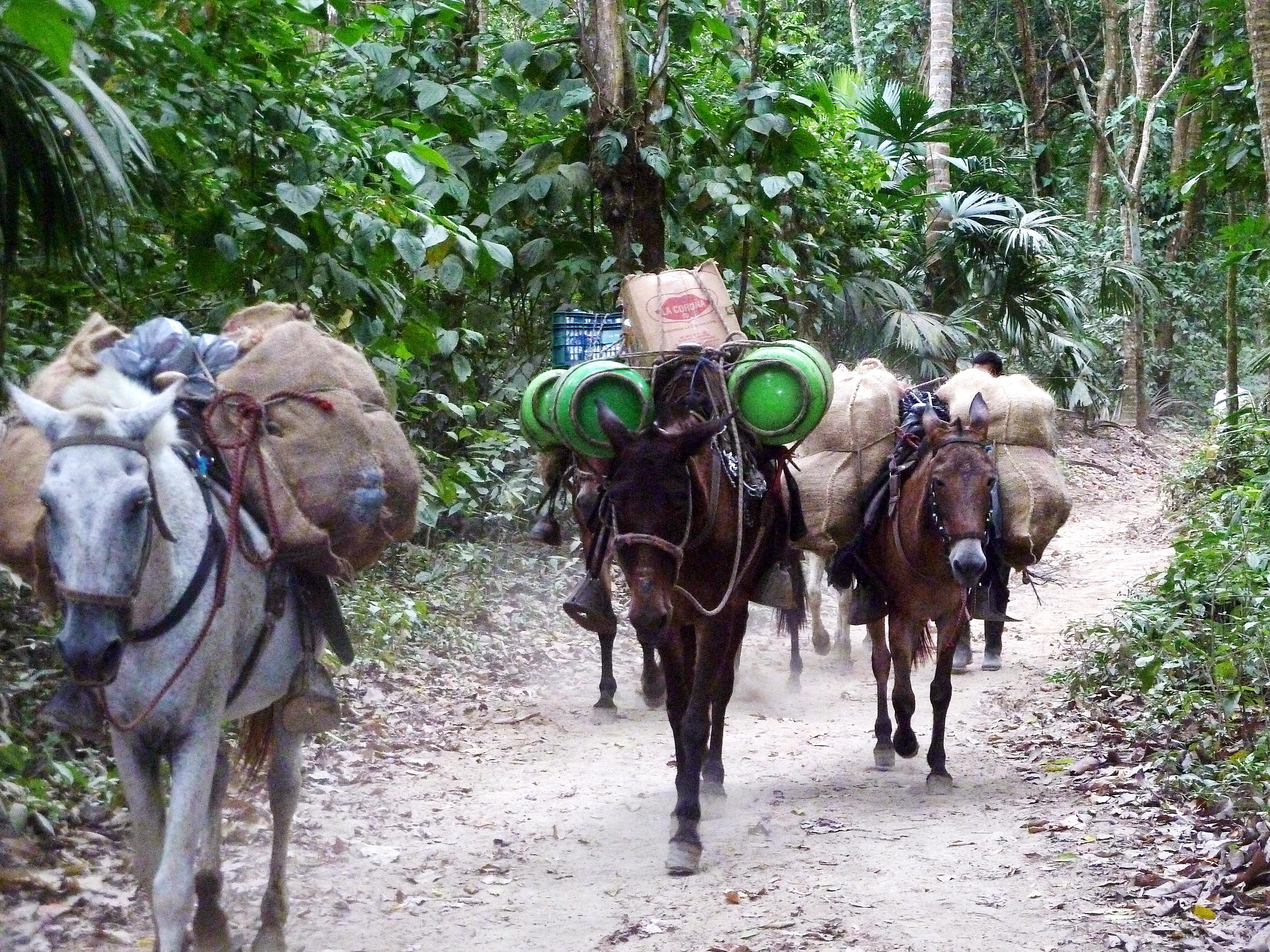 File:104 Donkeys in Tayrona Park Colombia.JPG - Wikimedia ...