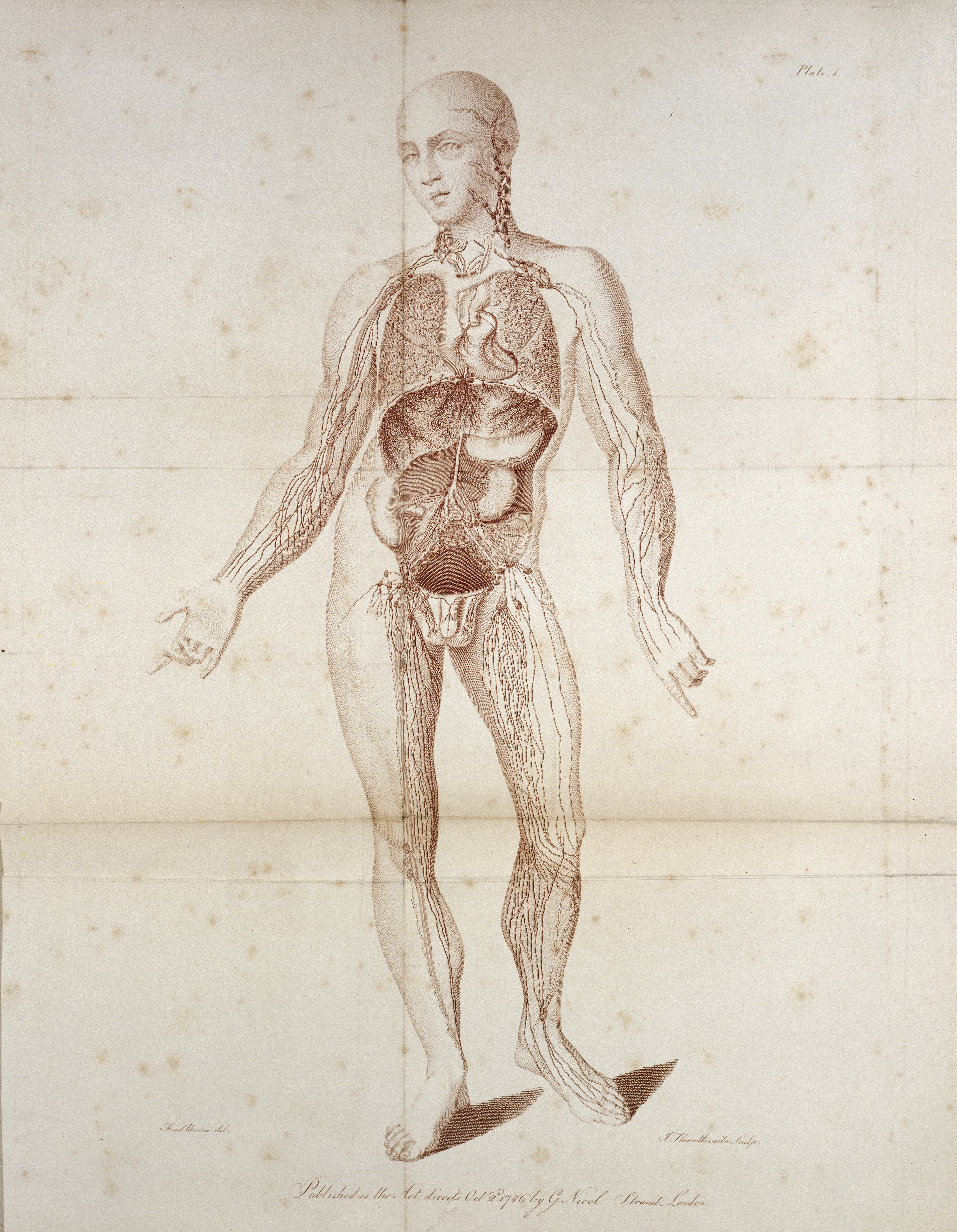 Fileabsorbing Vessels Of The Human Body By W Cruikshank Wellcome