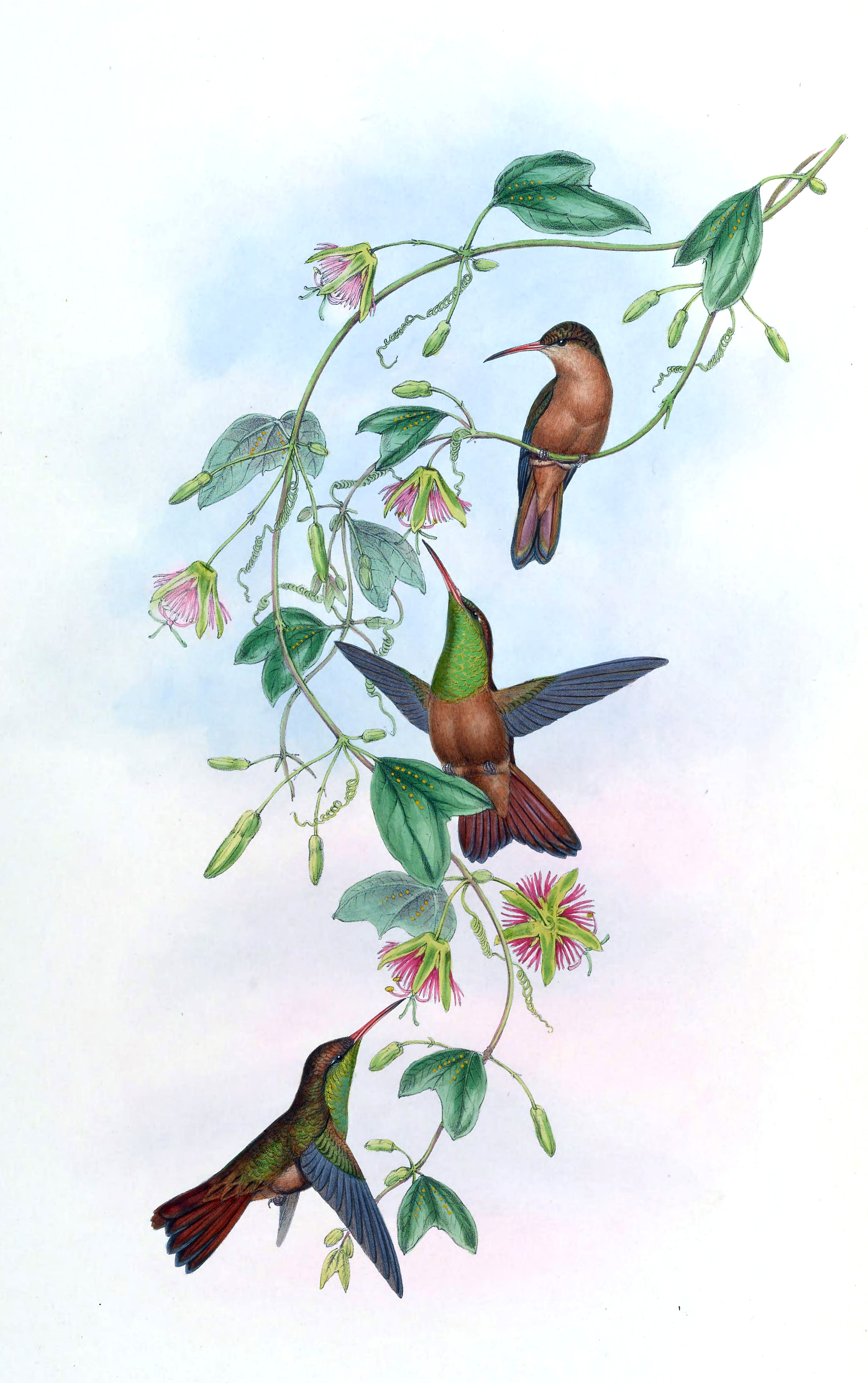 hummingbird pattern